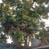Poda Y Tala De árboles