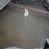 Ejecución de pozo de drenaje