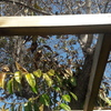 Poda de árbol en patio interior de casa