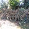 Retiro ramas de poda y basura