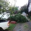 Sacar árbol de condominio
