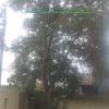 Cortar un árbol