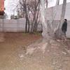 Remover 2 árboles de patio, entrega casa