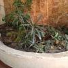 Remodelar y mantener jardines en edificio