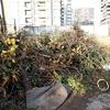 Retiro de ramas, maderas y basura en general