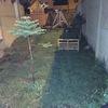 Remodelar jardin