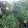 Poda de árboles y retiro de ramas