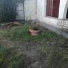 Desmalezar ante jardín