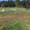 Plantar pasto en parcela
