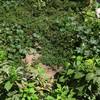 Fumigar malezas del jardin de la casa quedaron mus estrechas de las plantas